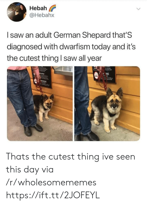 german shepard: Hebah  @Hebahx  Isaw an adult German Shepard that'S  diagnosed with dwarfism today and it's  saw all year  the cutest thing  ING  sMORNG Thats the cutest thing ive seen this day via /r/wholesomememes https://ift.tt/2JOFEYL