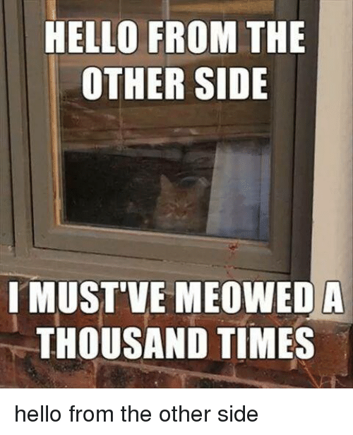 Funny, Hello, and Times: HELLO FROM THE  OTHER SIDE  I MUST'VE MEOWEDA  THOUSAND TIMES hello from the other side