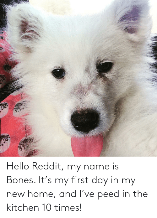 peed: Hello Reddit, my name is Bones. It's my first day in my new home, and I've peed in the kitchen 10 times!
