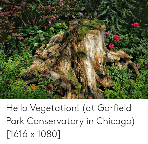 Chicago, Hello, and Garfield: Hello Vegetation! (at Garfield Park Conservatory in Chicago) [1616 x 1080]