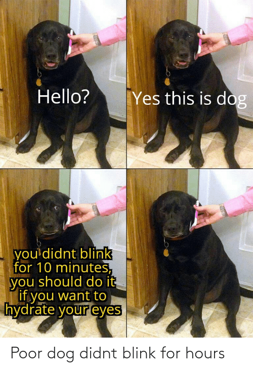 You Should: Hello?  Yes this is dog  you'didnt blink  for 10 minutes,  you should do it  Tif you want to  hydrate your eyes Poor dog didnt blink for hours