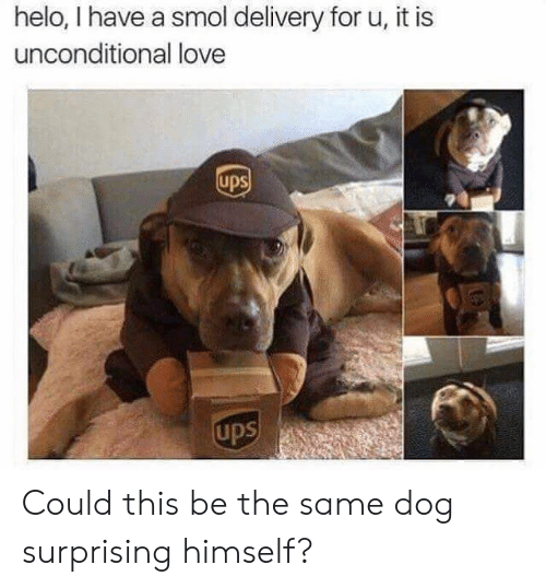 Love, Ups, and Dog: helo, I have a smol delivery for u, it is  unconditional love  ups  ups Could this be the same dog surprising himself?