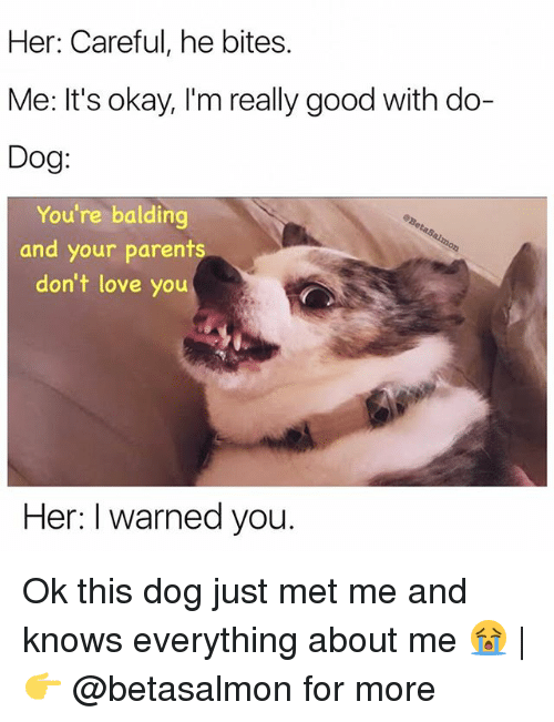 I Warned You: Her: Careful, he bites.  Me: It's okay, I'm really good with do-  Dog:  You're balding  and your parents  don't love you  Her: I warned you. Ok this dog just met me and knows everything about me 😭 | 👉 @betasalmon for more