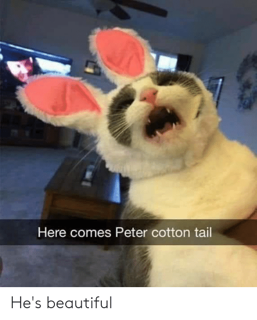 Beautiful, Memes, and 🤖: Here comes Peter cotton tail He's beautiful