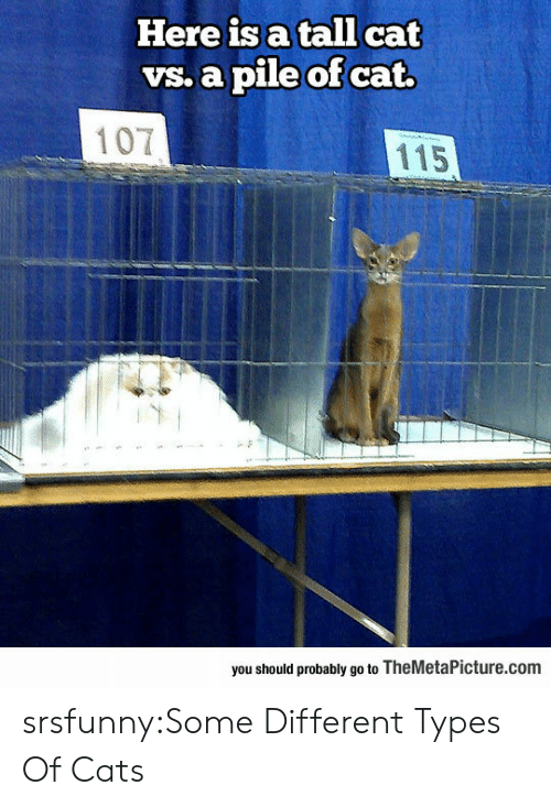 Different Types Of: Here is a tall cat  vs. a pile of cat.  107  115  you should probably go to TheMetaPicture.com srsfunny:Some Different Types Of Cats