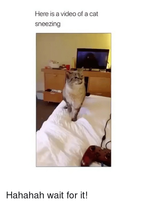 Cat Sneezing: Here is a video of a cat  sneezing Hahahah wait for it!