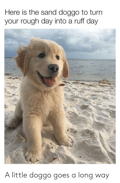 rough day: Here is the sand doggo to turn  your rough day into a ruff day A little doggo goes a long way