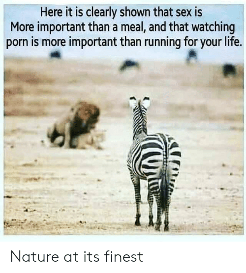 Shown: Here it is clearly shown that sex is  More important than a meal, and that watching  porn is more important than running for your life. Nature at its finest