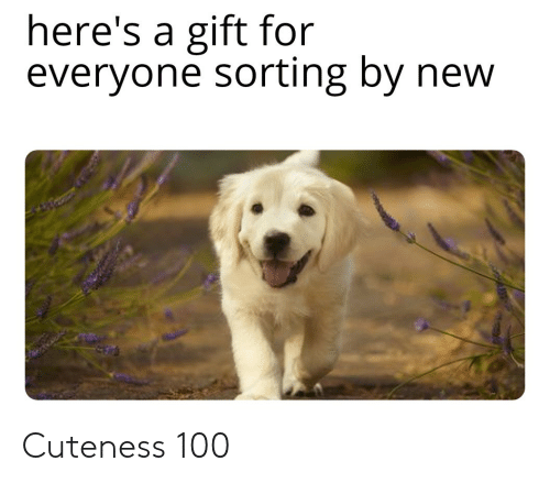cuteness: here's a gift for  everyone sorting by new Cuteness 100