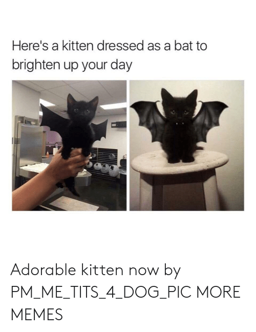 kitten: Here's a kitten dressed as a bat to  brighten up your day Adorable kitten now by PM_ME_TITS_4_DOG_PIC MORE MEMES