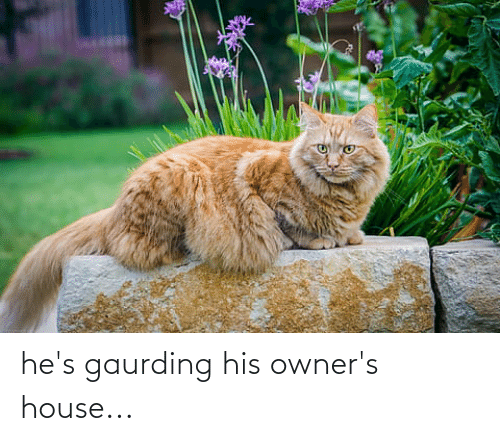 Owners: he's gaurding his owner's house...