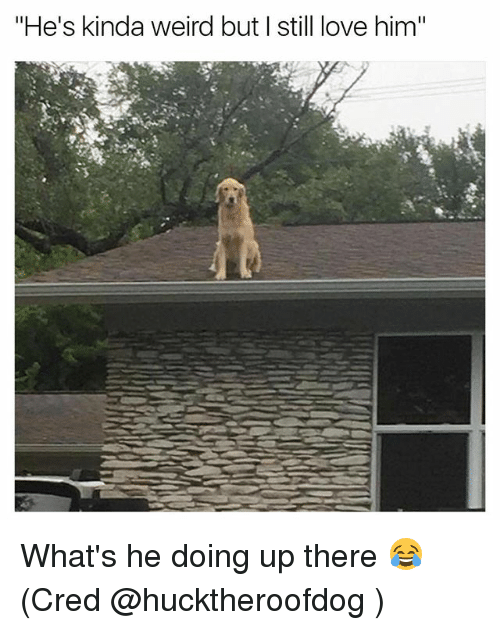 """Funny, Love, and Weird: """"He's kinda weird but I still love him"""" What's he doing up there 😂 (Cred @hucktheroofdog )"""