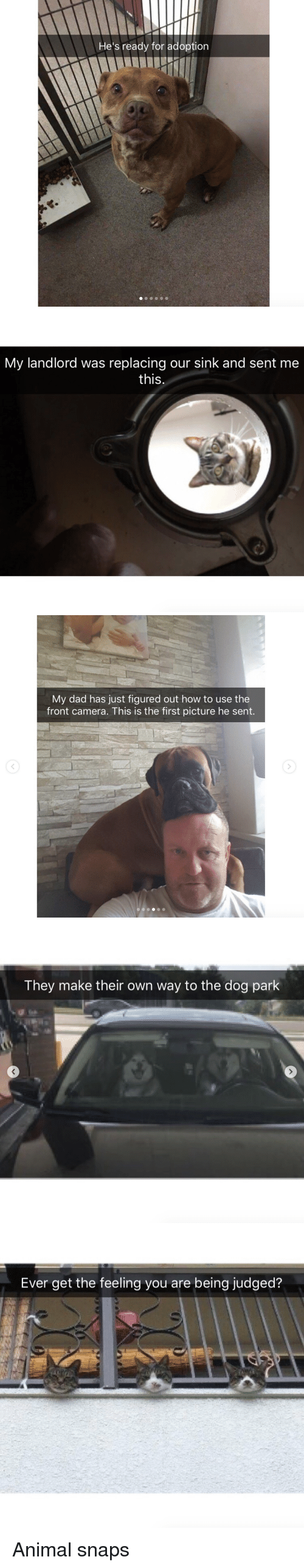 Dad, Animal, and Camera: He's ready for adoption   My landlord was replacing our sink and sent me  this  C)   My dad has just figured out how to use the  front camera. This is the first picture he sent.   They make their own way to the dog park   Ever get the feeling you are being judged? <p>Animal snaps<br/></p>
