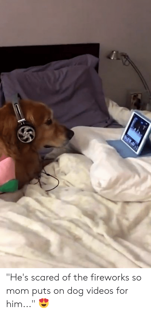 """Fireworks: """"He's scared of the fireworks so mom puts on dog videos for him..."""" 😍"""
