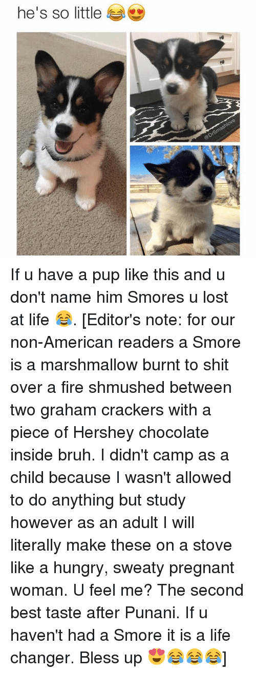 Punany: he's so little If u have a pup like this and u don't name him Smores u lost at life 😂. [Editor's note: for our non-American readers a Smore is a marshmallow burnt to shit over a fire shmushed between two graham crackers with a piece of Hershey chocolate inside bruh. I didn't camp as a child because I wasn't allowed to do anything but study however as an adult I will literally make these on a stove like a hungry, sweaty pregnant woman. U feel me? The second best taste after Punani. If u haven't had a Smore it is a life changer. Bless up 😍😂😂😂]