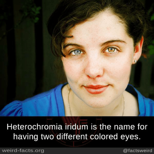 Facts, Memes, and Weird: Heterochromia iridum is the name for  having two different colored eyes.  weird-facts.org  @factsweird