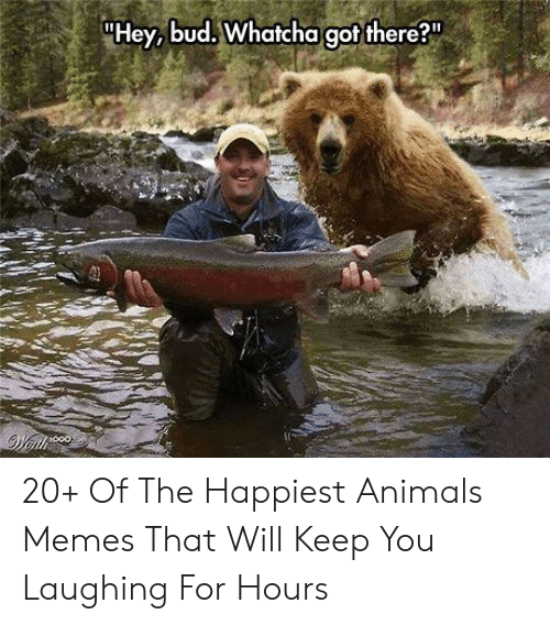 Animals Memes: Hey, bud. Whatcha got there? 20+ Of The Happiest Animals Memes That Will Keep You Laughing For Hours