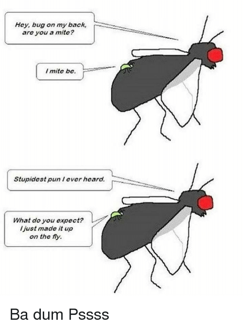 Ba Dum: Hey, bug on my back,  are you a mite?  I mite be.  Stupidest pun lever heard.  What do you expect?  l just made it up  on the fy. Ba dum Pssss