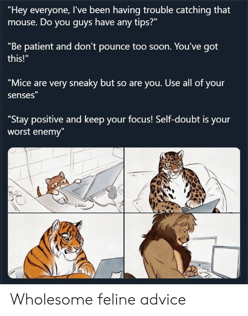 "Patient: ""Hey everyone, I've been having trouble catching that  mouse. Do you guys have any tips?""  ""Be patient and don't pounce too soon. You've got  this!""  ""Mice are very sneaky but so are you. Use all of your  senses""  ""Stay positive and keep your focus! Self-doubt is your  worst enemy""  NRRT Wholesome feline advice"