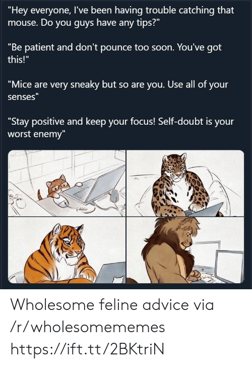 "Patient: ""Hey everyone, I've been having trouble catching that  mouse. Do you guys have any tips?""  ""Be patient and don't pounce too soon. You've got  this!""  ""Mice are very sneaky but so are you. Use all of your  senses""  ""Stay positive and keep your focus! Self-doubt is your  worst enemy""  NRRT Wholesome feline advice via /r/wholesomememes https://ift.tt/2BKtriN"