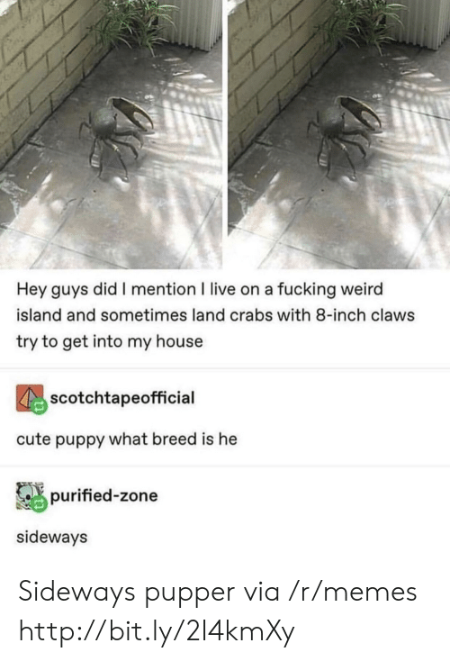 fucking weird: Hey guys did I mention I live on a fucking weird  island and sometimes land crabs with 8-inch claws  try to get into my house  scotchtapeofficial  cute puppy what breed is he  purified-zone  sideways Sideways pupper via /r/memes http://bit.ly/2I4kmXy