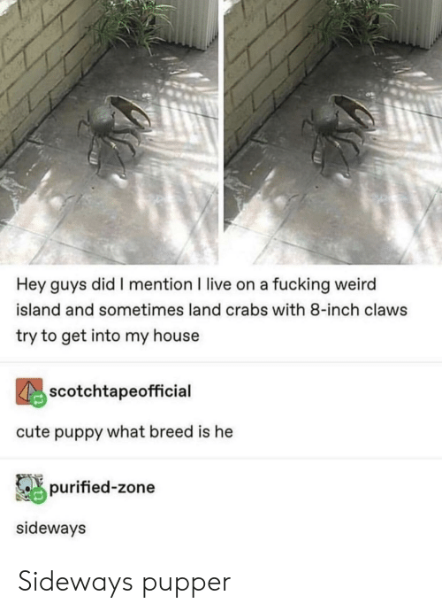 fucking weird: Hey guys did I mention I live on a fucking weird  island and sometimes land crabs with 8-inch claws  try to get into my house  scotchtapeofficial  cute puppy what breed is he  purified-zone  sideways Sideways pupper