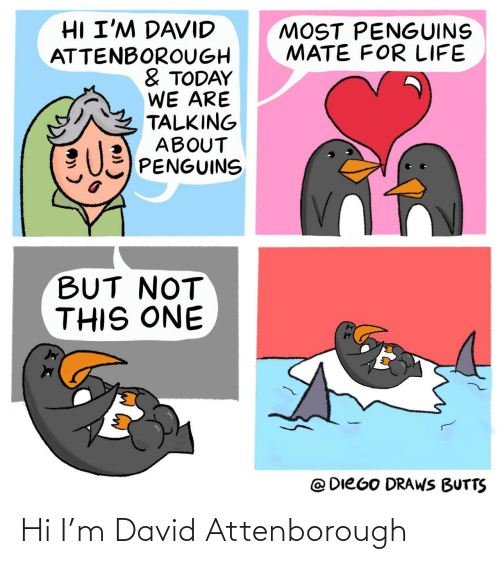David: Hi I'm David Attenborough