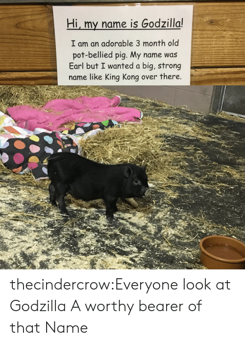 Godzilla, Tumblr, and Blog: Hi, my name is Godzilla!  I am an adorable 3 month old  pot-bellied pig. My name was  Earl but I wanted a big, strong  name like King Kong over there. thecindercrow:Everyone look at Godzilla  A worthy bearer of that Name