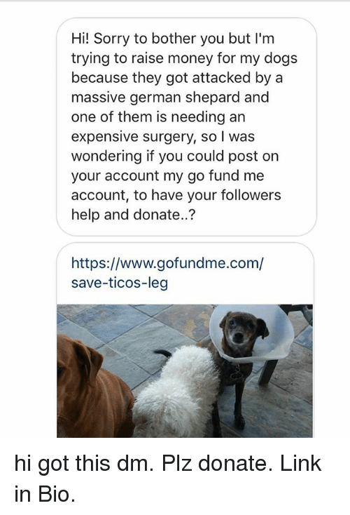 german shepard: Hi! Sorry to bother you but I'm  trying to raise money for my dogs  because they got attacked by a  massive german shepard and  one of them is needing an  expensive surgery, so I was  wondering if you could post on  your account my go fund me  account, to have your followers  help and donate..?  https://www.gofundme.com/  save-ticos-leg hi got this dm. Plz donate. Link in Bio.
