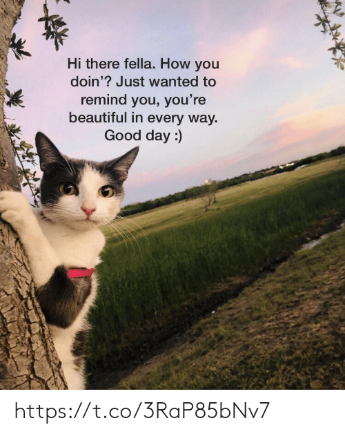 hi there: Hi there fella. How you  doin'? Just wanted to  remind you, you're  beautiful in every way  Good day:) https://t.co/3RaP85bNv7