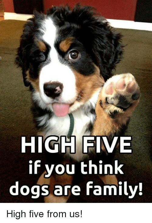 how to train your dog to high five
