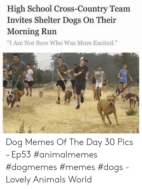 """Memes Dogs: High School Cross-Country Team  Invites Shelter Dogs On Their  Morning Run  """"I Am Not Sure Who Was More Excited."""" Dog Memes Of The Day 30 Pics – Ep53 #animalmemes #dogmemes #memes #dogs - Lovely Animals World"""