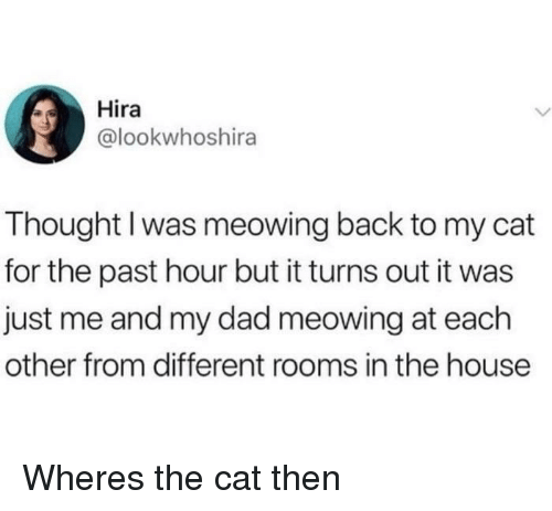 Dad, House, and Thought: Hira  @lookwhoshira  Thought I was meowing back to my cat  for the past hour but it turns out it was  just me and my dad meowing at each  other from different rooms in the house Wheres the cat then