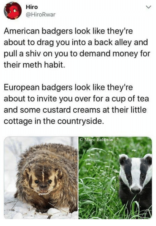 Memes, Money, and American: Hiro  @HiroRwar  American badgers look like they're  about to drag you into a back alley and  pull a shiv on you to demand money for  their meth habit.  European badgers look like they're  about to invite you over for a cup of tea  and some custard creams at their little  cottage in the countryside.  O Marc Baldwin