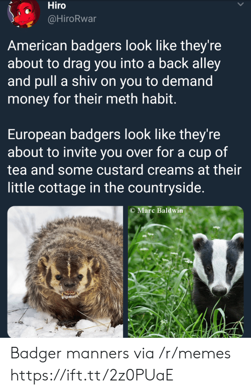 Memes, Money, and American: Hiro  @HiroRwar  American badgers look like they're  about to drag you into a back alley  and pull a shiv on you to demand  money for their meth habit  European badgers look like they're  about to invite you over for a cup of  tea and some custard creams at their  little cottage in the countryside.  C Marc Baldwin Badger manners via /r/memes https://ift.tt/2z0PUaE