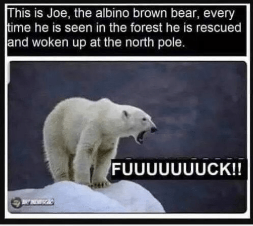 the forest: his is Joe, the albino brown bear, every  ime he is seen in the forest he is rescued  and woken up at the north pole