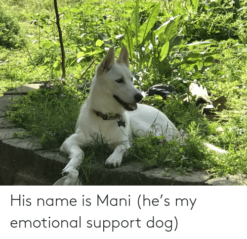 mani: His name is Mani (he's my emotional support dog)