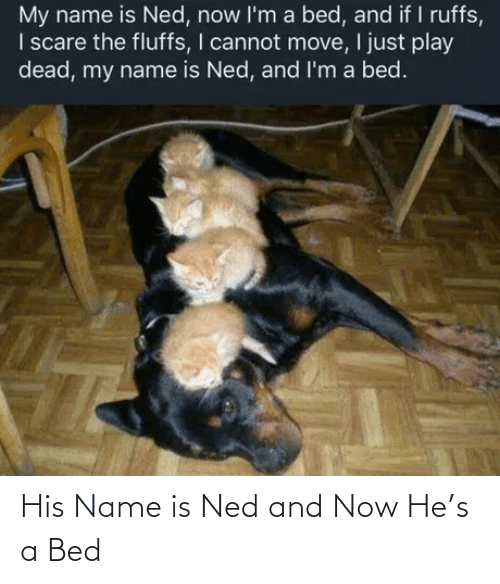 And Now: His Name is Ned and Now He's a Bed