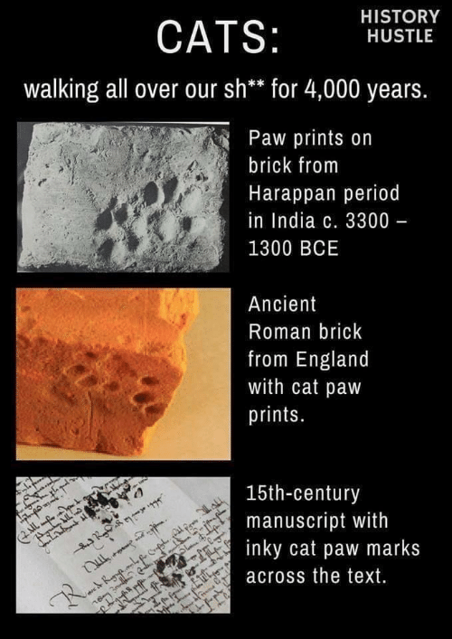 hustle: HISTORY  CATS:  HUSTLE  walking all over our sh** for 4,000 years.  Paw prints on  brick from  Harappan period  in India c. 3300 -  1300 BCE  Ancient  Roman brick  from England  with cat paw  prints.  15th-century  manuscript with  inky cat paw marks  IL  across the text.  R