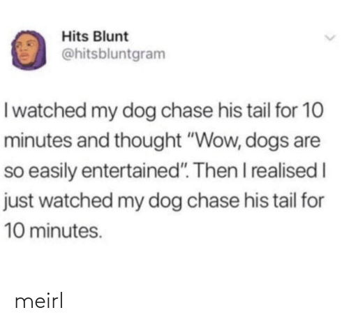 """My Dog: Hits Blunt  @hitsbluntgram  Iwatched my dog chase his tail for 10  minutes and thought """"Wow, dogs are  so easily entertained"""". Then I realised I  just watched my dog chase his tail for  10 minutes. meirl"""