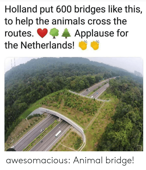 Animals, Tumblr, and Animal: Holland put 600 bridges like this,  to help the animals cross the  Applause for  routes.  the Netherlands! awesomacious:  Animal bridge!