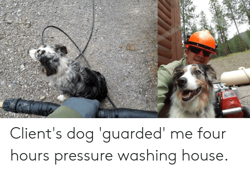 Honda, Pressure, and House: HONDA Client's dog 'guarded' me four hours pressure washing house.