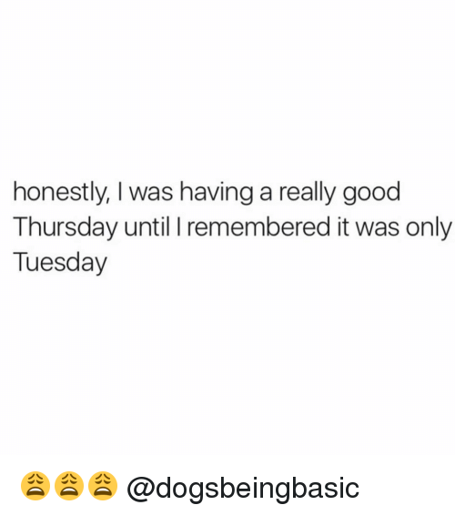 Honestity: honestly, was having a really good  Thursday until I remembered it was only  Tuesday 😩😩😩 @dogsbeingbasic