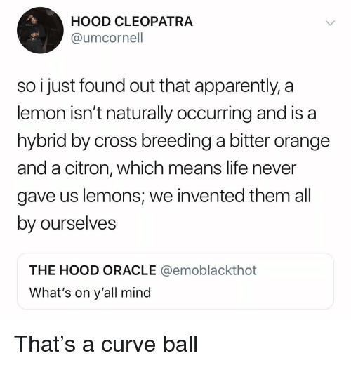 Apparently, Curving, and Funny: HOOD CLEOPATRA  @umcornell  CRe  so i just found out that apparently, a  lemon isn't naturally occurring and is a  hybrid by cross breeding a bitter orange  and a citron, which means life never  gave us lemons, we invented them all  by ourselves  THE HOOD ORACLE @emoblackthot  What's on y'all mind That's a curve ball