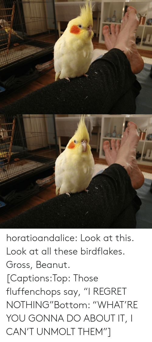 """Regret Nothing: horatioandalice:  Look at this. Look at all these birdflakes. Gross, Beanut.[Captions:Top:Those fluffenchops say, """"I REGRET NOTHING""""Bottom: """"WHAT'RE YOU GONNA DO ABOUT IT, I CAN'T UNMOLT THEM""""]"""