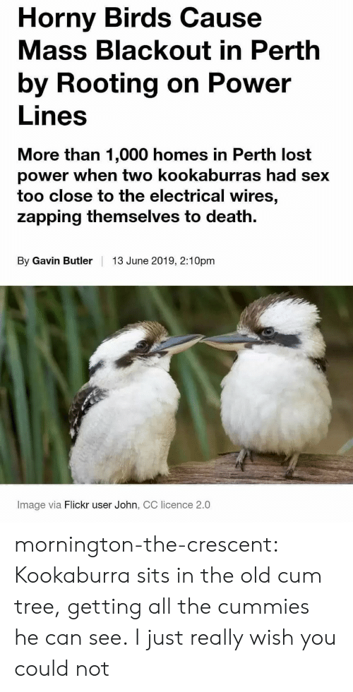 Cum, Horny, and Sex: Horny Birds Cause  Mass Blackout in Perth  by Rooting on Power  Lines  More than 1,000 homes in Perth lost  power when two kookaburras had sex  too close to the electrical wires,  zapping themselves to death  By Gavin Butler  13 June 2019, 2:10pm  Image via Flickr user John, CC licence 2.0 mornington-the-crescent:  Kookaburra sits in the old cum tree, getting all the cummies he can see.  I just really wish you could not