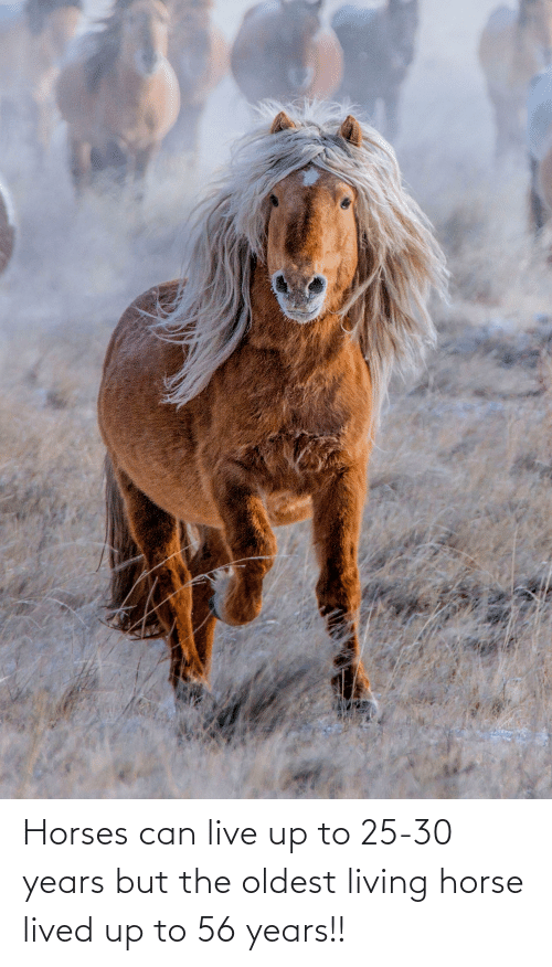 Horses: Horses can live up to 25-30 years but the oldest living horse lived up to 56 years!!