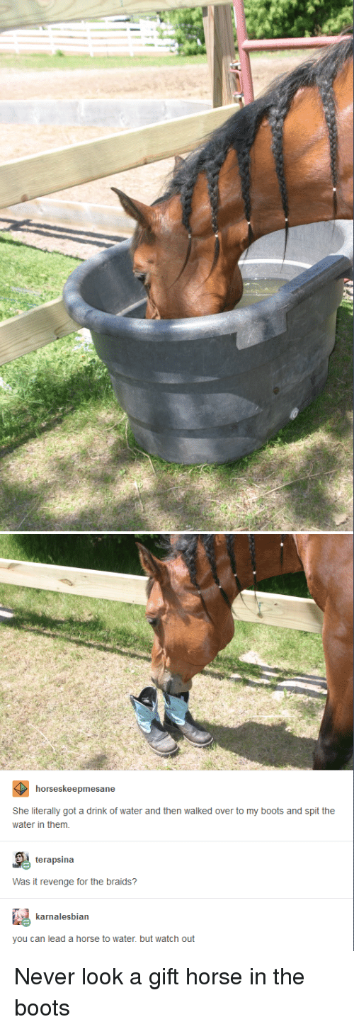 Braids: horseskeepmesane  She literally got a drink of water and then walked over to my boots and spit the  water in them.  terapsina  Was it revenge for the braids?  karnalesbian  you can lead a horse to water. but watch out Never look a gift horse in the boots