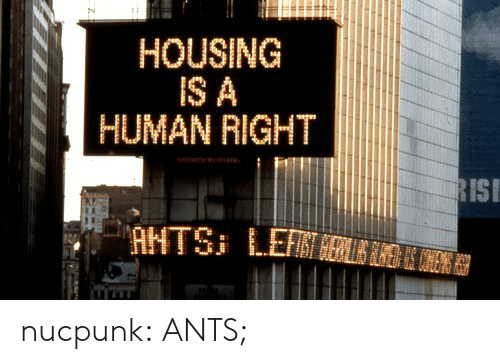 Target, Tumblr, and Blog: HOUSING  IS A  HUMAN RIGHT  ISI nucpunk:  ANTS;