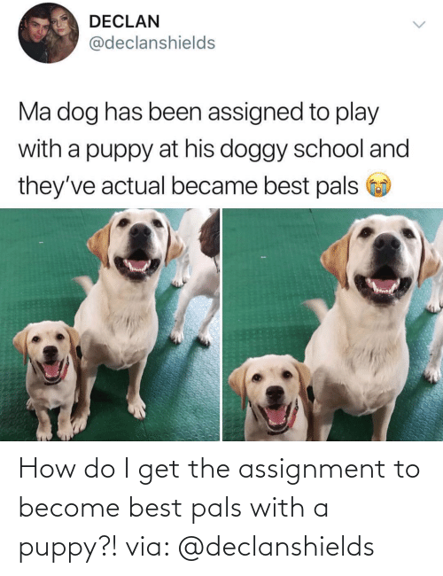 Puppy: How do I get the assignment to become best pals with a puppy?! via: @declanshields